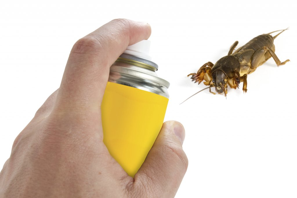 Getting Rid Of Pests